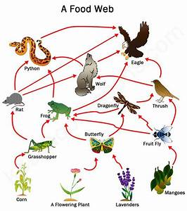 493 best images about Science - Food Chains/Food Webs on ...