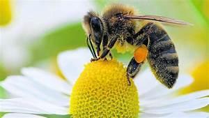 Wie Machen Bienen Honig : verluste bei den honig bienen wolfhagen ~ Whattoseeinmadrid.com Haus und Dekorationen