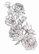 Coloring Peony sketch template