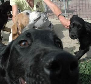 Spa Vannes Chien : le t l gramme vannes ville spa le chien vol a d j ~ Dallasstarsshop.com Idées de Décoration
