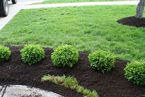 Favorite Bushes For Landscaping Ideas Design Decors Image