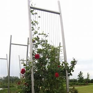 Support Plantes Grimpantes : support metallique pour plante grimpante ~ Dode.kayakingforconservation.com Idées de Décoration