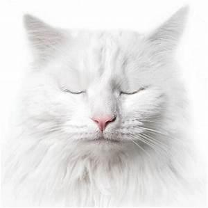 gifs animes de chats