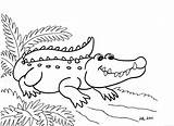 Alligator Coloring Pages Printable sketch template