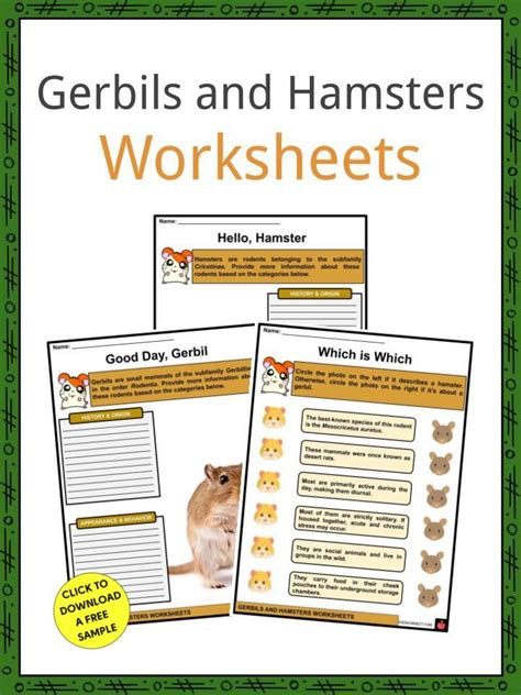 Hamsters are great little creatures to have as pets. Gerbils and Hamsters Facts & Worksheets in 2020 | Gerbil, Hamster, Worksheets