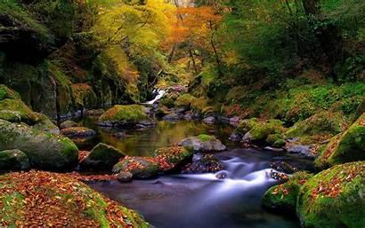 Stream Forest Wallpapers Desktop Backgrounds Spring Forests