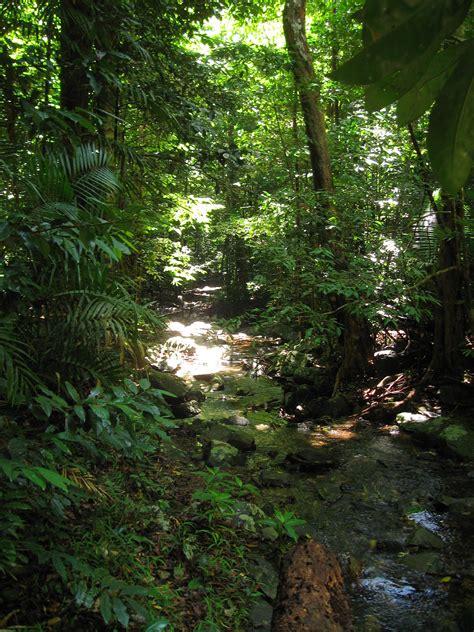 Daintree Rainforest Wikipedia