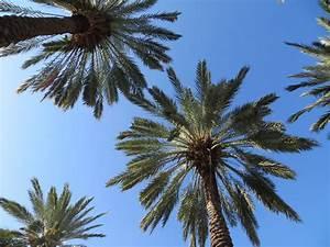 Miami Palm Trees – Trish+Brian