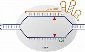 Functional Genetics For All  Engineered Nucleases  Crispr