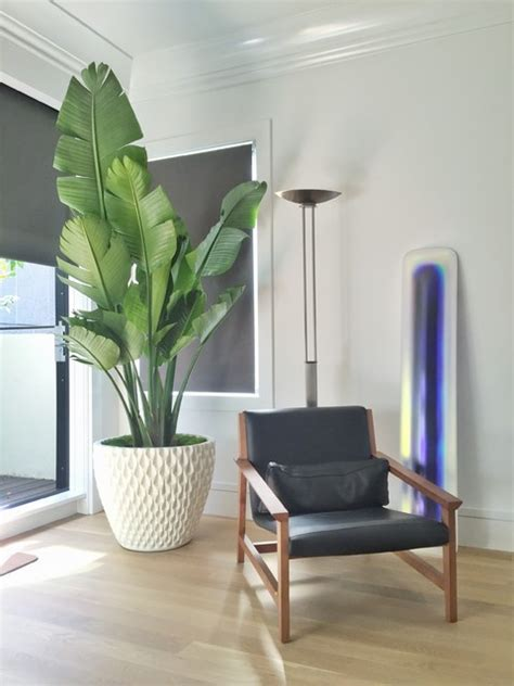 Bedroom Designs With Plants by Modern House Plants Modern Bedroom San Francisco