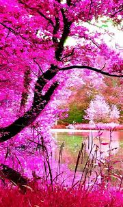 Beautiful Nature | Best nature wallpapers, Android ...