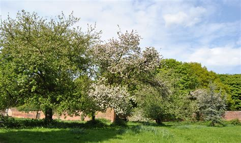 garden trees file bank hall walled garden apple trees may 2010 jpg wikimedia commons