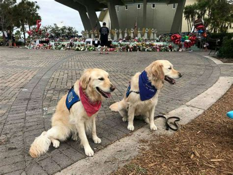 lcc comfort dogs comfort dogs descend on florida community after deadly