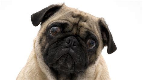 dogs   sweet    upset   strangers cry