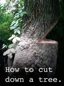 how to cut a tree diy timber frame