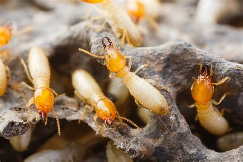 Know The Signs Of Termite Damage In Your Home