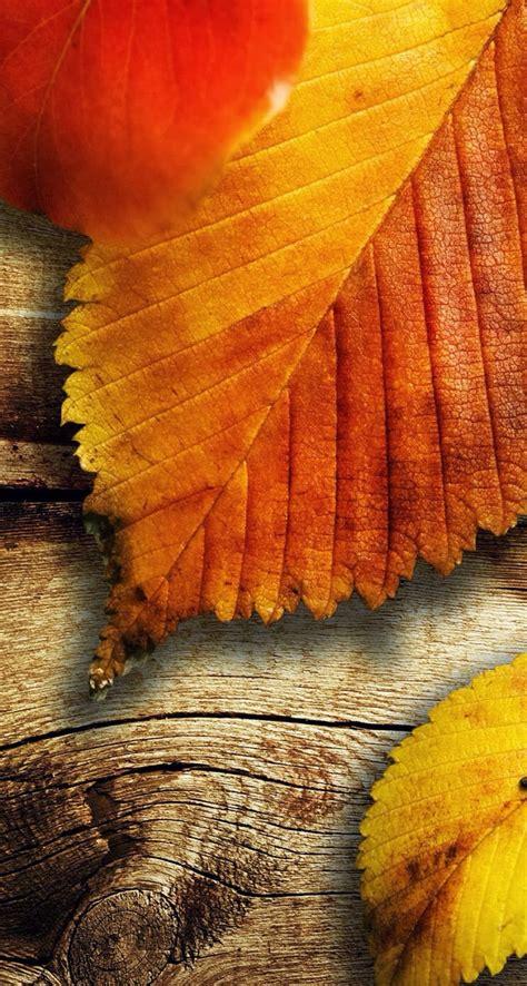 秋天的枫叶iPhone5S小米手机壁纸 免费手机壁纸下载-找素材网