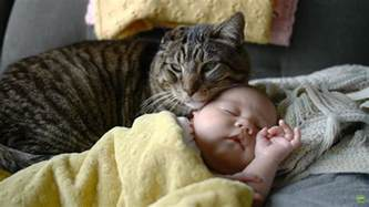 cat watches baby with cats