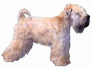 all dog breeds a to z types of dogs list of dogs