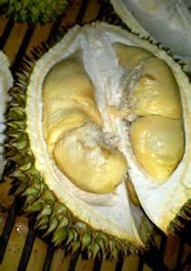 Wanita Mengandung Makan Durian Ngidam Durian M
