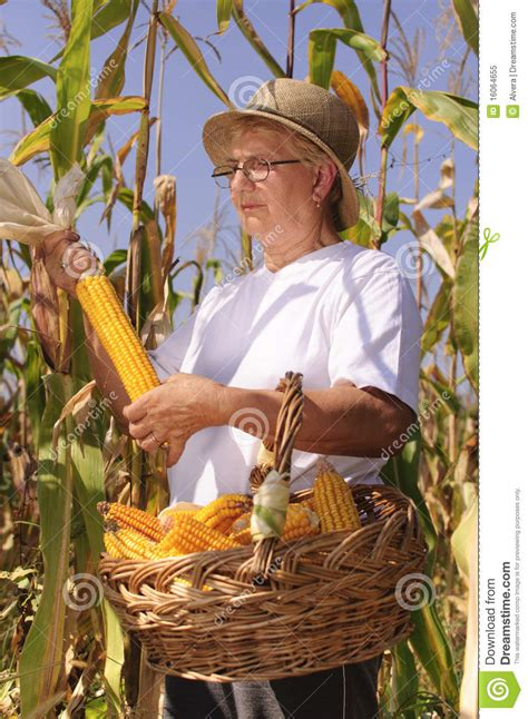 Old Farmer Woman With Maize Stock Image - Image: 16064655
