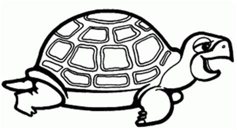 La Chachipedia: Tortugas terrestres y marinas para colorear