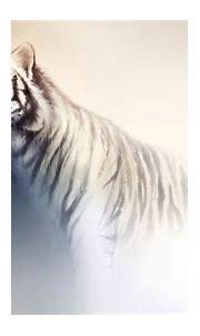 Tiger fantasy art wallpaper | 1920x1080 | 143858 | WallpaperUP