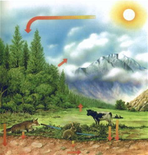 Naturally Better Oxygen 450g Biome by Ecological Concern Meaning Of Ecology And The Need For