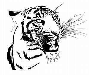Schwarz Weiß Bilder Tiere : tierzeichnungen von nicole schwerdtfeger ~ Markanthonyermac.com Haus und Dekorationen