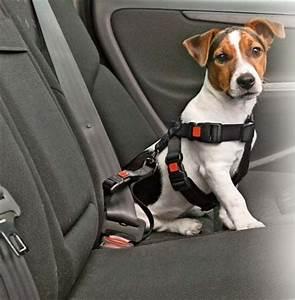 Voiture Pour Chien : harnais et ceinture s curit en voiture pour chien taille l les amis de celine ~ Medecine-chirurgie-esthetiques.com Avis de Voitures