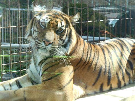 東山 動物園 予約