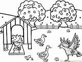 Coloring Farm Printable Hen Feeding Chicken Henhouse Animal Colouring Sheets Sheet Chickens Library Hens Chicks Clipart Tractor Coloringpages101 Related Turkey sketch template