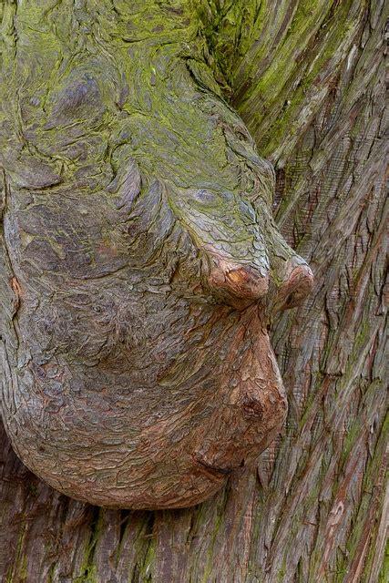 bäume als sichtschutz 1411 besten b 195 ume wurzeln wald so fantastisch bilder auf wald zauberwald und