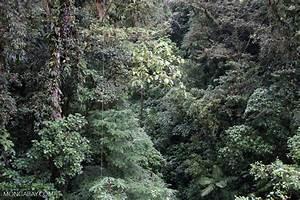 Costa Rican rainforest canopy