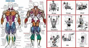 Lifting Techniques For Beginners To Increase Your Performance