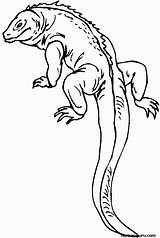 Pages Lizard Coloring Lizards Printable Popular sketch template