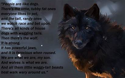 Wolf Desktop Backgrounds Wolves Background Wallpapers Text