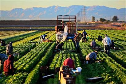 Pertanian Perkebunan Dan Tanaman Jenis Perbedaan Yang