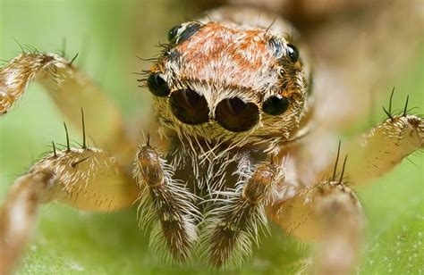 Facts About The Different Types Of Spiders