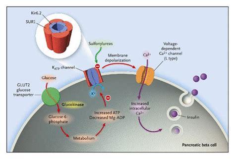 activating mutations   gene encoding  atp