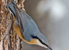 Uccello Simile Al Gabbiano - uccelli pagina 6 mille animali