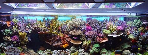 Led Lights For Reef Tank by Top 10 Best Led Aquarium Lighting For Plants And Corals