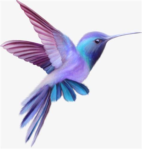 bird colors color birds clipart color clipart colored