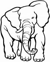 Elephant Coloring African Animals Elephants sketch template