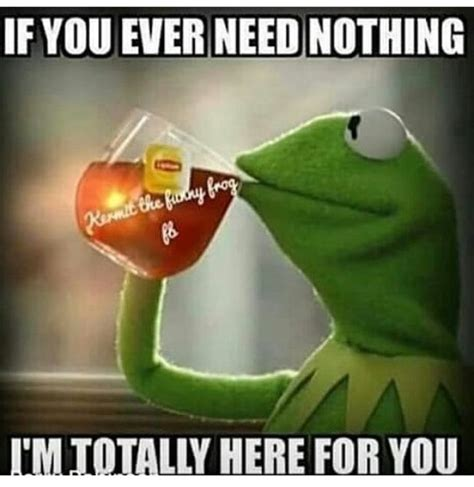 Kermit Tea Memes - 183 best images about kermit memes on pinterest