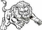 Coloring Lion Realistic Popular sketch template