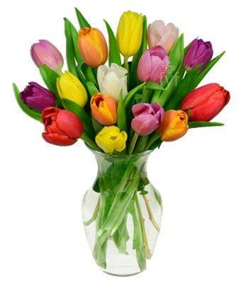 rainbow tulip bouquet  stems    flowers