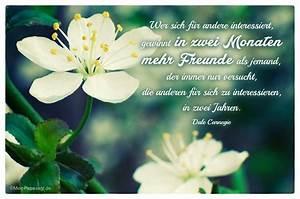 Welche Blume Steht Für Leben : top 10 zitate freundschaft mit bild ~ Whattoseeinmadrid.com Haus und Dekorationen
