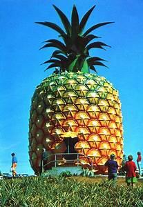 giant pineapple house | Pineapple | Pinterest | Bobs ...