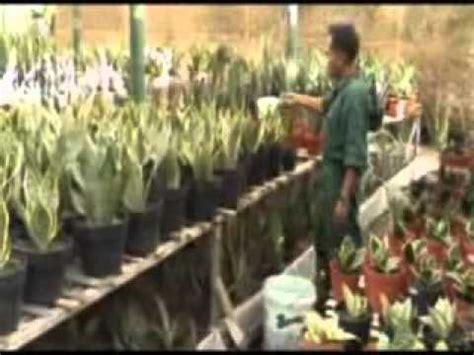 kebun anggrek tanaman hias nasa youtube